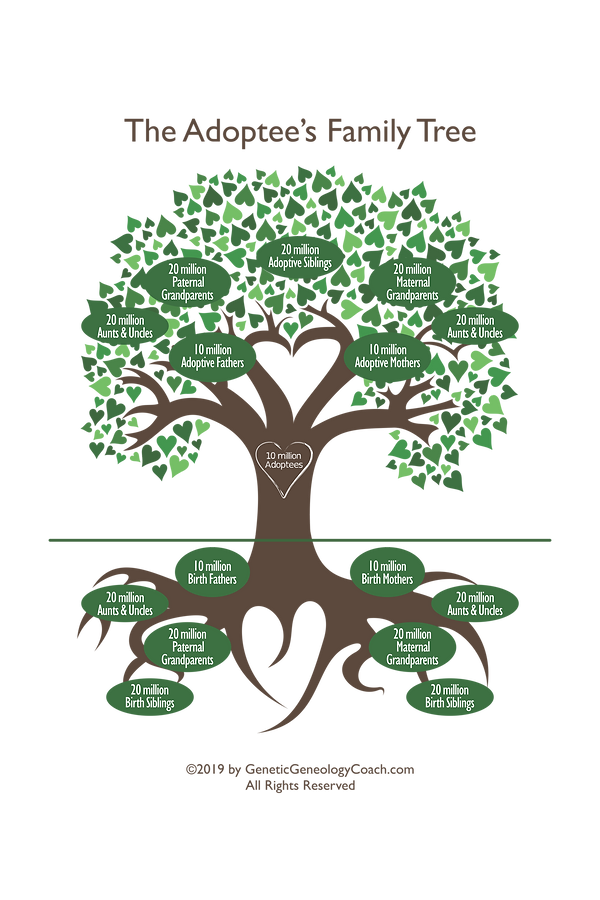Adoptees Family Tree - geneticgenealogyc