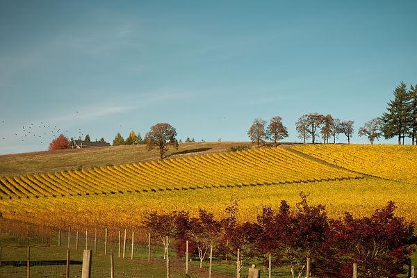 Vineyards (1 of 1).jpg