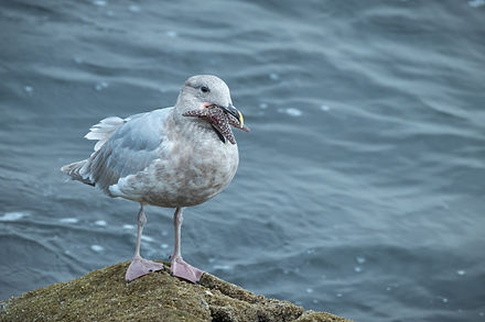 Gull & Starfish - Copy.jpg