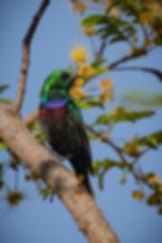 Marico Sunbird 2_edited_edited.jpg