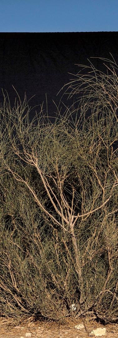 Tree in mourning.jpg