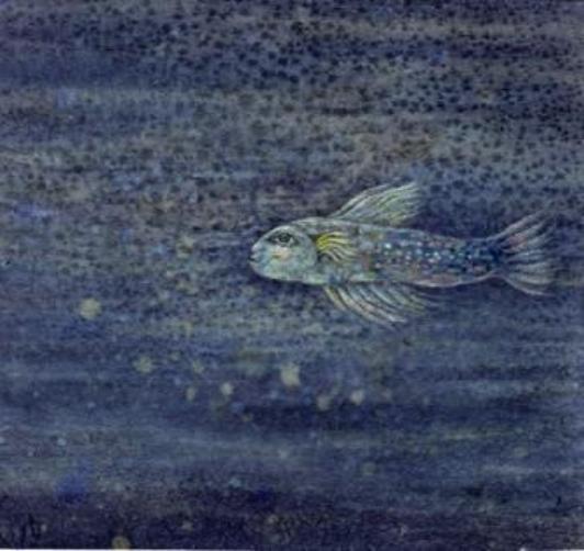 deep-sea-fish