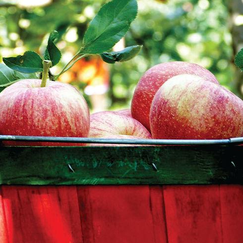 apples_16129bc.jpg