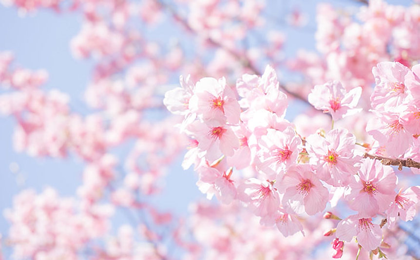 naniwa-sakura-spot.jpg