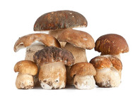 Funghi Porcini Interi