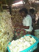 Eco-Clean Ghana Mushroom Cultivation.jpg