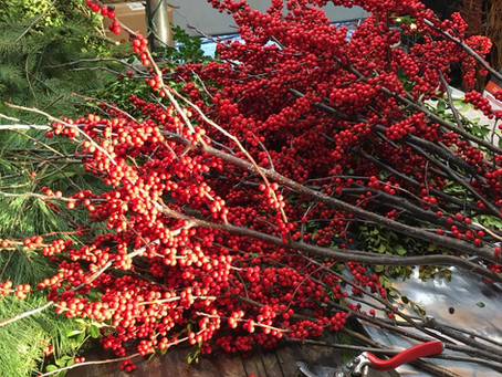 Winterberry: A fall and winter favorite