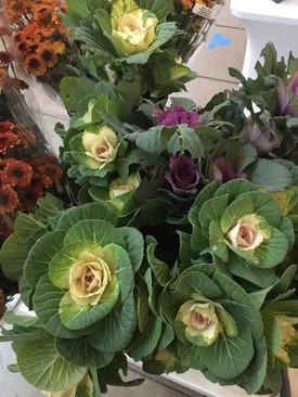 Flowering Kale (ornamental)
