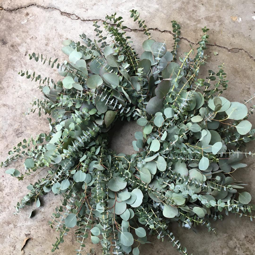 Eucalyptus  Fresh Eucalyptus wreath, a mixture varieties of Eucalyptus. Wreath will dry for long lasting beauty.