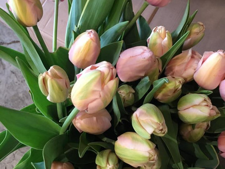Time for Tulips: 7 Things About Tulips You May Not Know