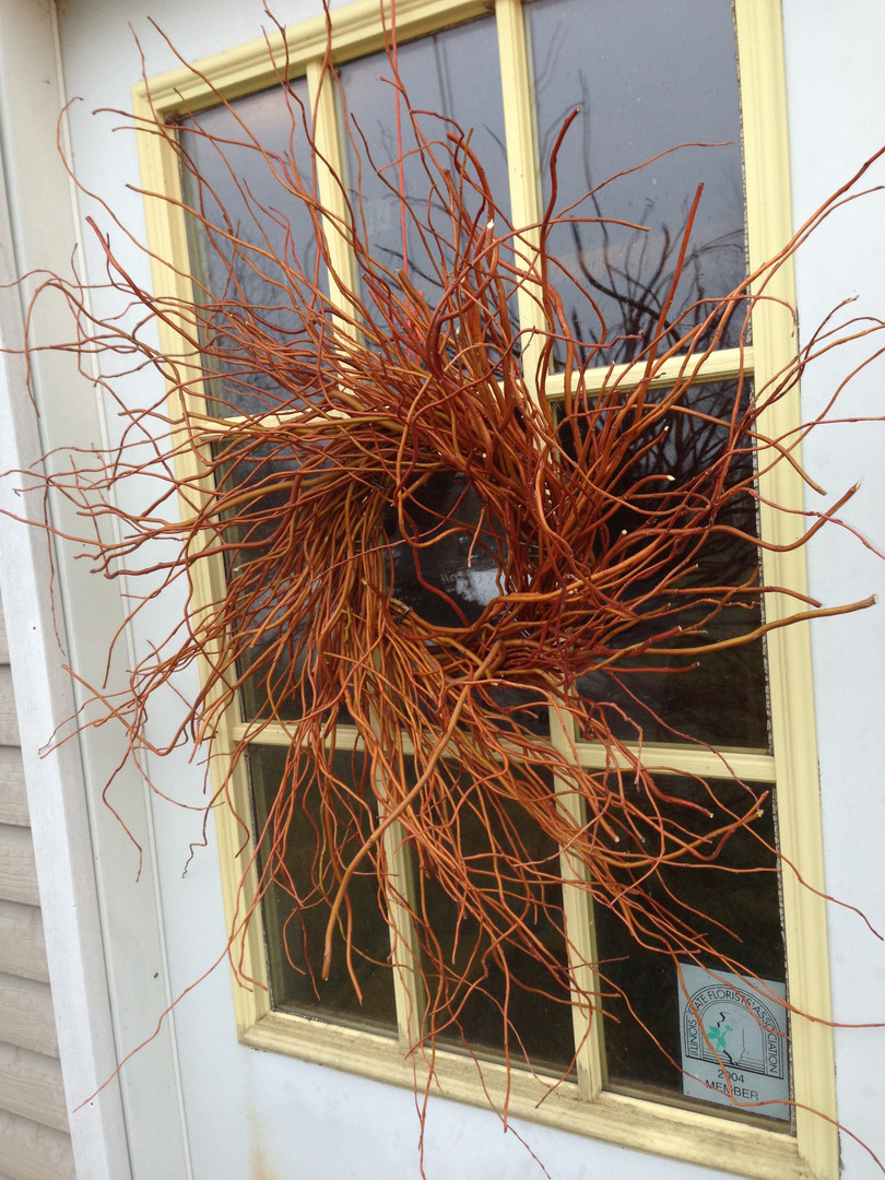 Red Curly Willow  Fresh Red Curly Willow branches for indoor or outdoor display. Bright copper / red branches maturing to a deeper color.