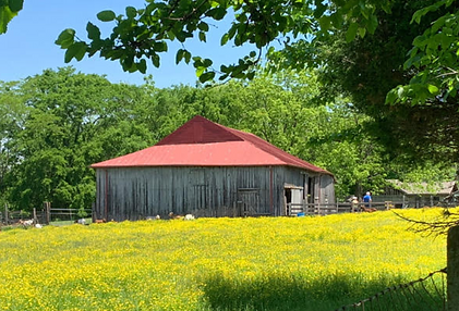 Blackacre barn from SS.PNG