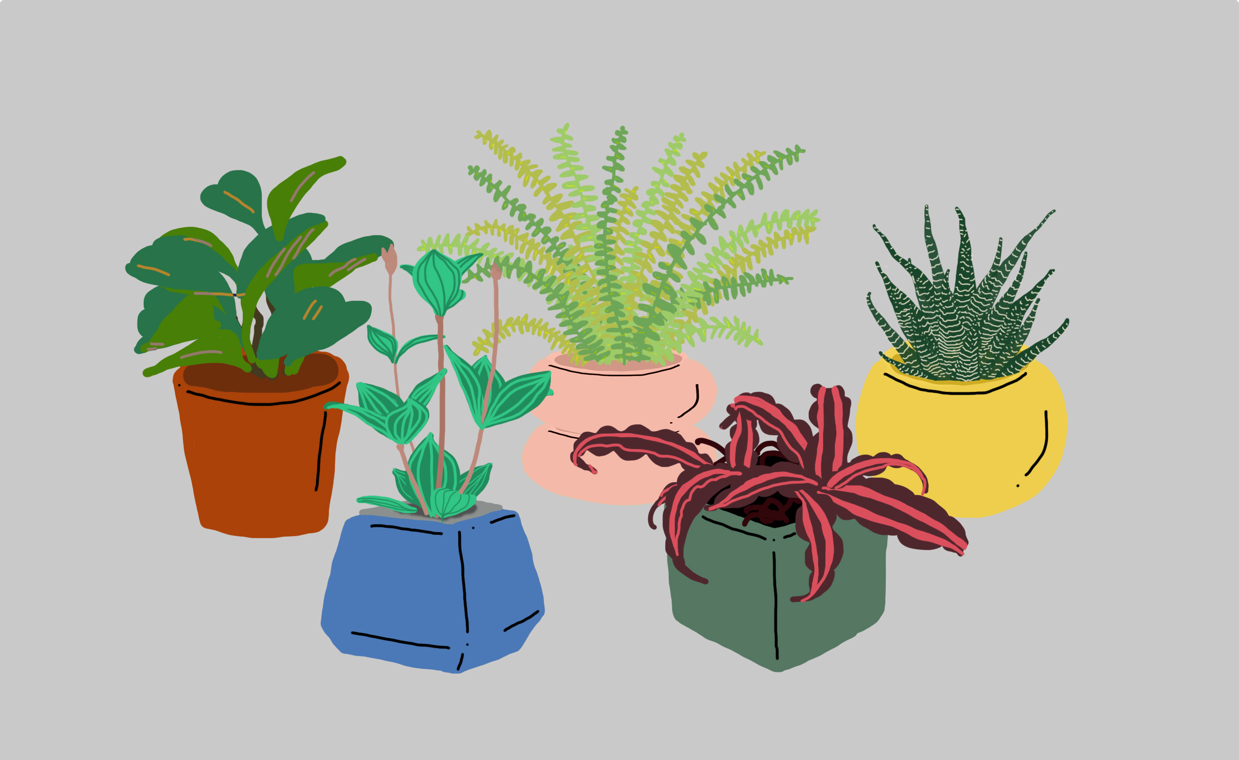 6.office plants