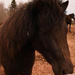 horse GG (28 of 90).jpeg