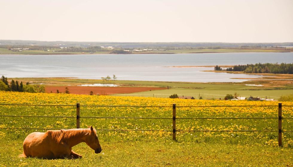 horse-gg-1-of-1-19.jpg