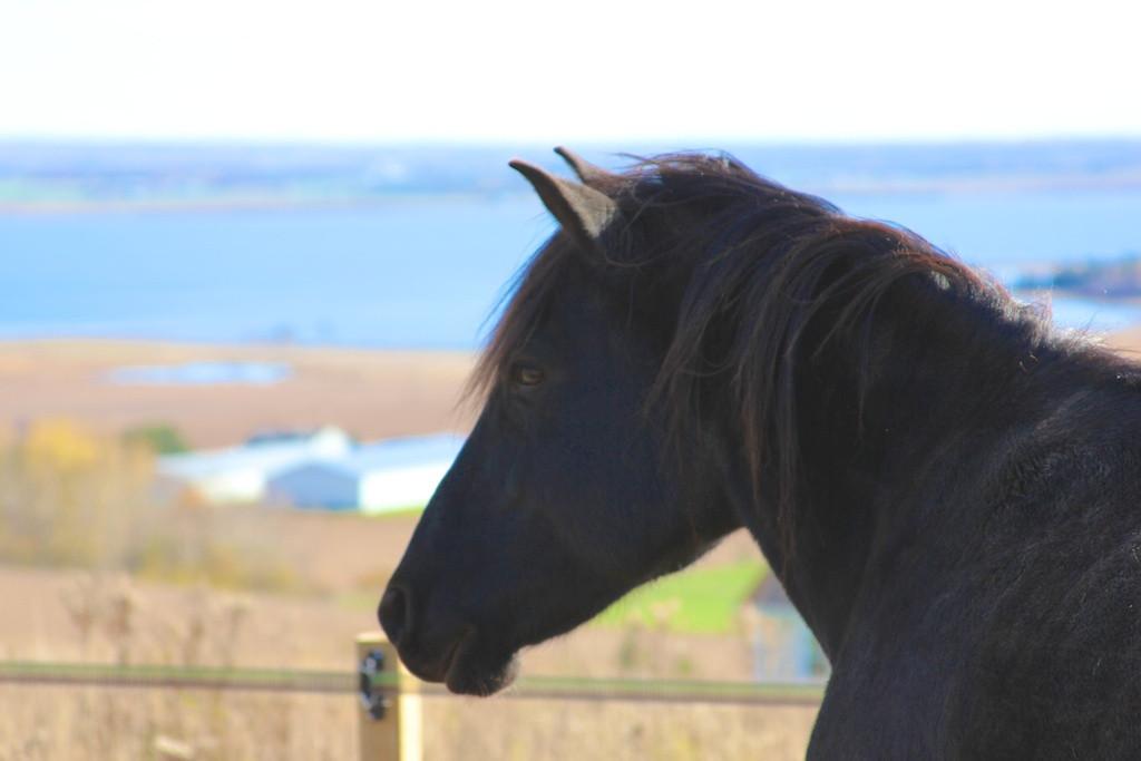 serene-view-ranch-13.jpg
