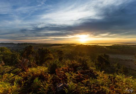 Lever de soleil dans la forêt Capbretonnaise