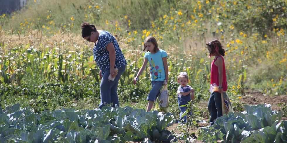 Field Trip: Miller Farms