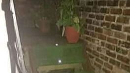 artificial grass with spotlights