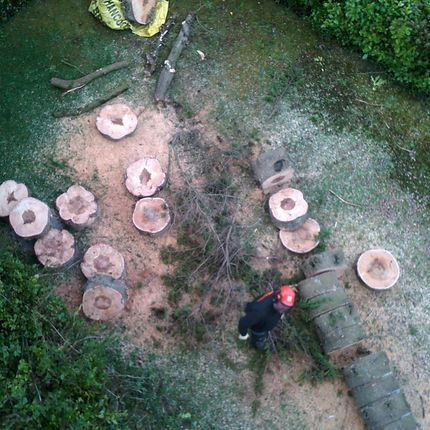 stump grinding and tree felling