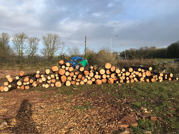 logs stacked in a field