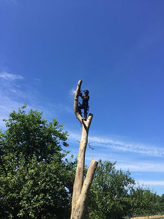 tree surgeon at the top of a tree
