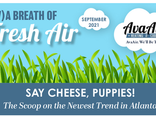 Say Cheese, Puppies! The Scoop on the Newest Trend in Atlanta.