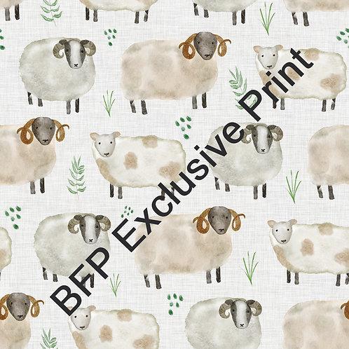Rams And Ewes - Sheep