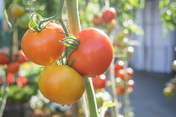 Growing Sustainably