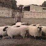 Historic Oxford Down photo