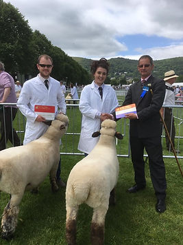 Monkstone Flock champion and reserve at Three counties