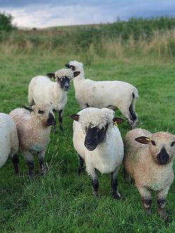 Rowan flock 05-08-21.jpg