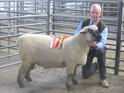 Oxford Ram at Carlisle