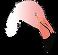 flamingo 6-10-2018.png