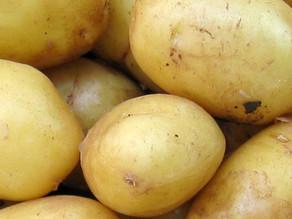Die Kartoffel im Sack