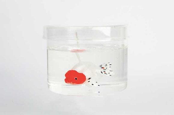 Lanshou goldfish (White)