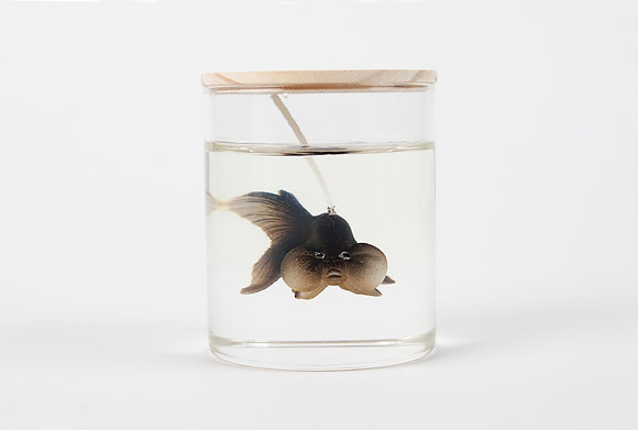 Bubble eye goldfish (Black)