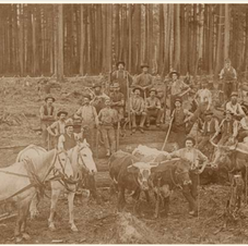 Logging Castley Farm 1894