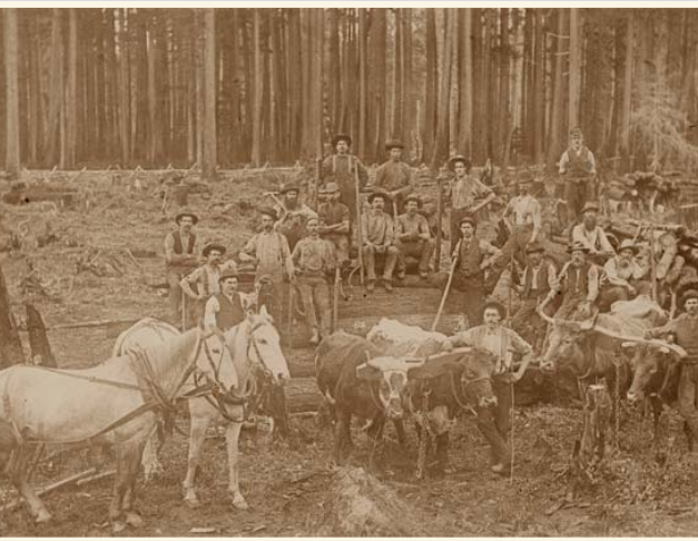 Logging Castley Farm 1894