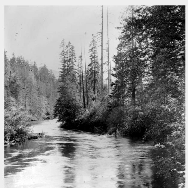 Cowichan River 1928