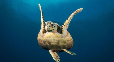 mv-virgo-happy-turtlew857h570crwidth857c