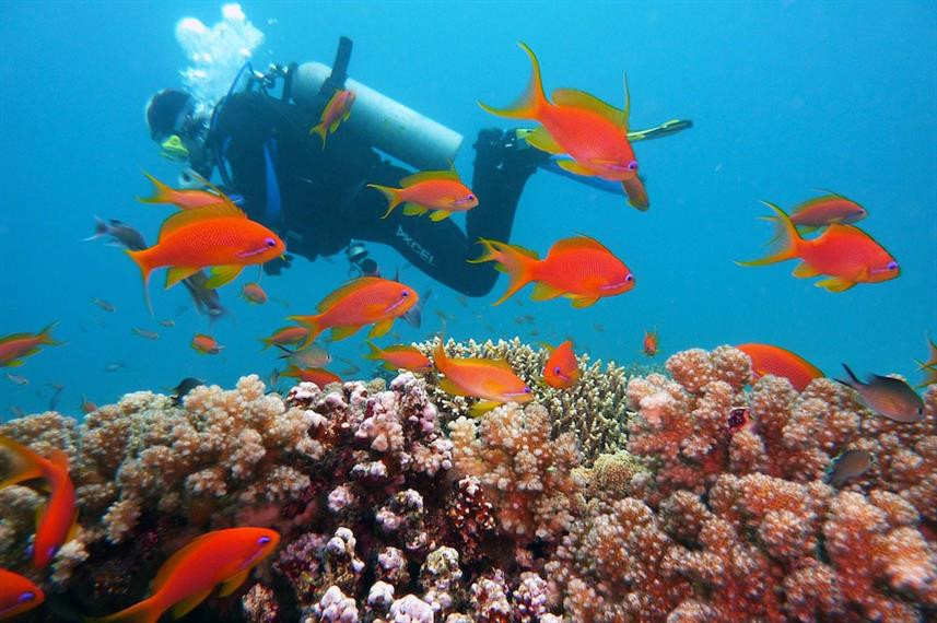diving_indow857h570crwidth857crheight570