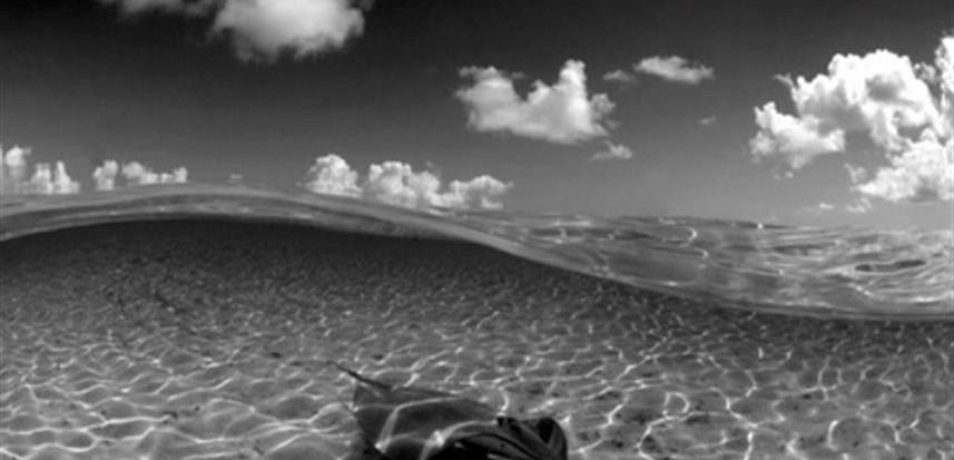 StingRay_French_Polynesia01w857h570crwid