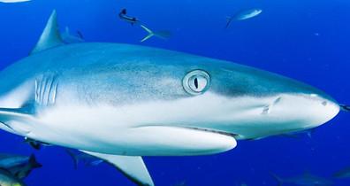 Shark-Mike-Ballw857h570crwidth857crheigh