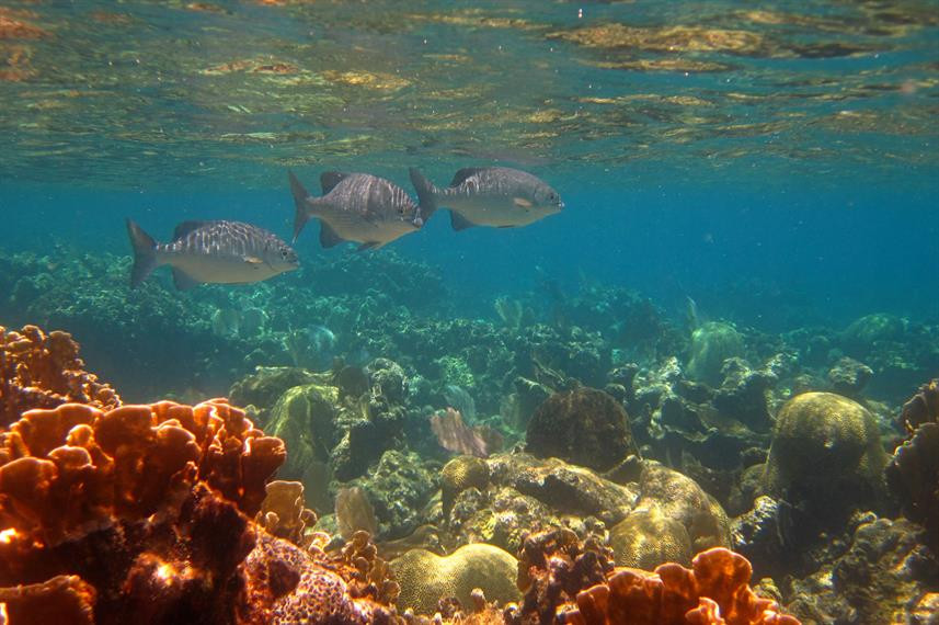 snorkelling-roatanw857h570crwidth857crhe