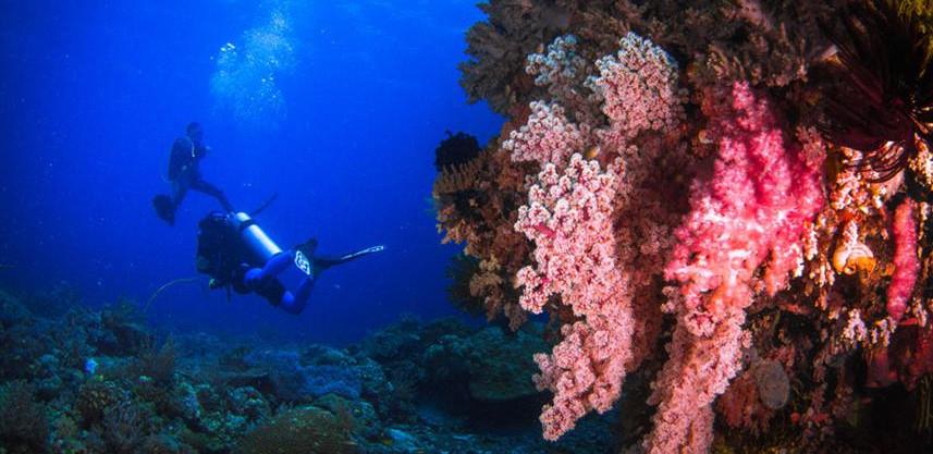 diver-2w857h570crwidth857crheight570.jpg