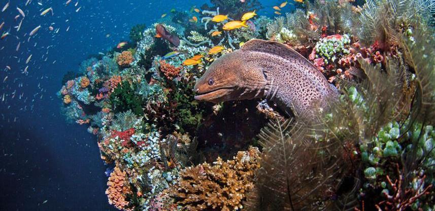 underwaterw857h570crwidth857crheight570.