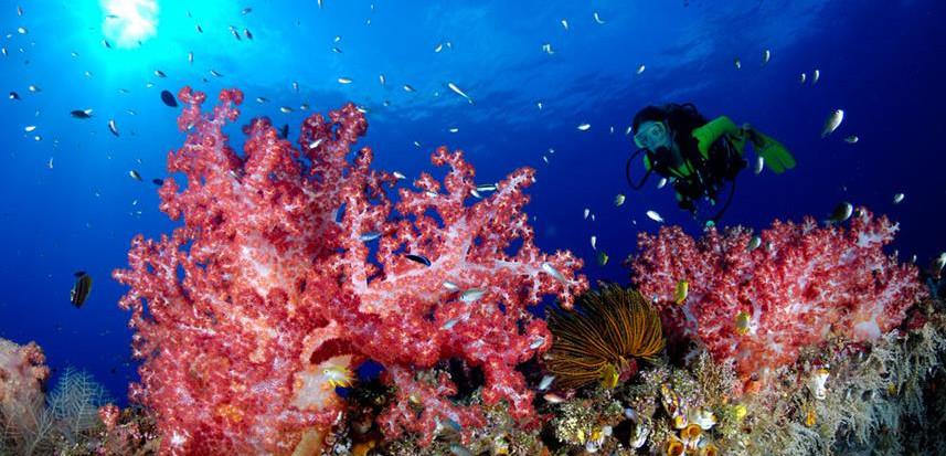 febrina-liveaboard-diving2w857h570crwidt