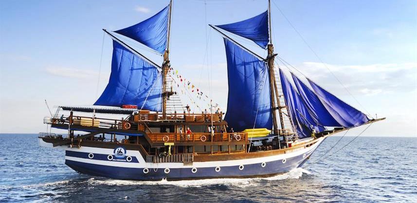 sea-safari-viiw857h570crwidth857crheight