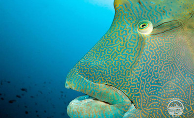 maldives_uw14w857h570crwidth857crheight5